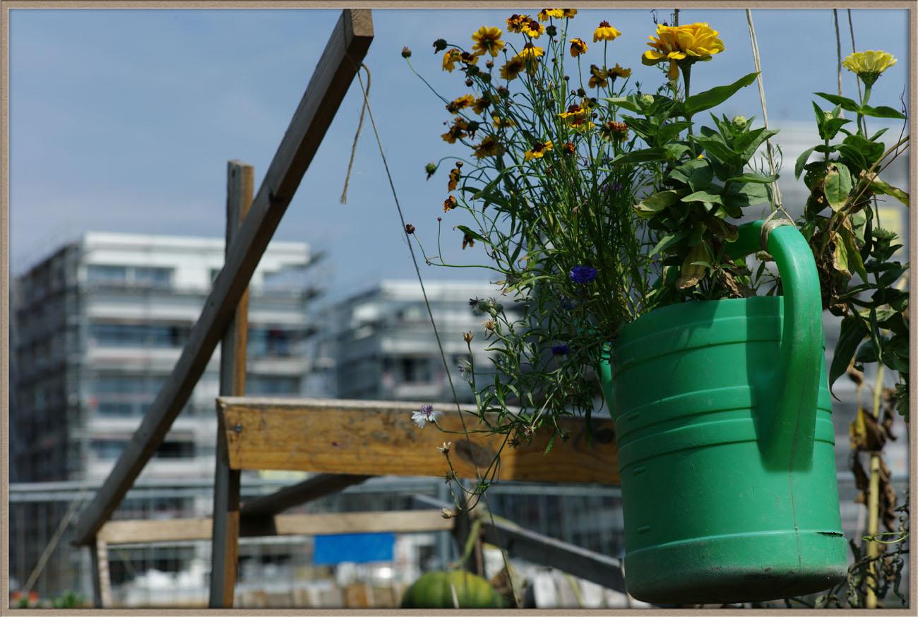 HafengartenOffenbach_Thorer_007
