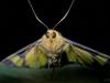 30_moth_korewori_dscn3505